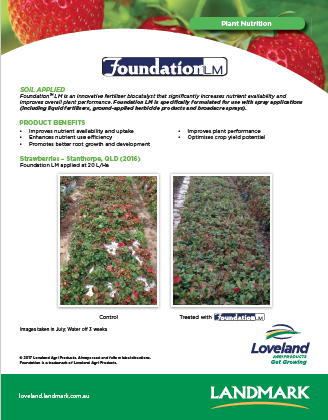 02-17 Foundation Strawberries v4.png