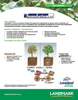 05-16 Foundation Macadamia v5.png