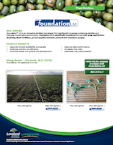 05-16-Foundation-Mung-beans-v4_1.png