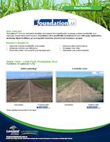 05-16-Foundation-sugar-cane-v5-1
