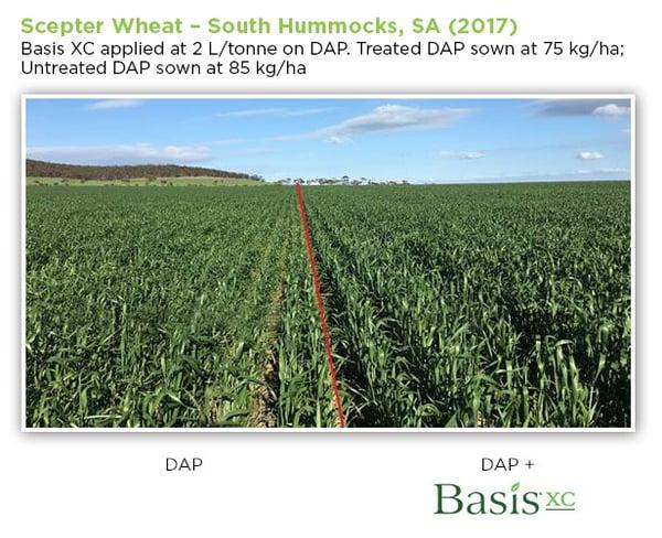 BasisXC-Scepter-Wheat-01.jpg