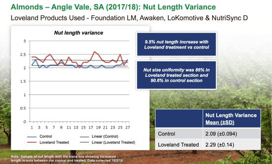 almond nut length variance