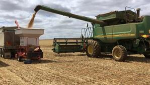 basis xc weight trailer wheat yield improvement