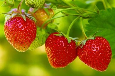 featured_strawberries.jpg
