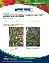 foundation_strawberries_thumb.jpg