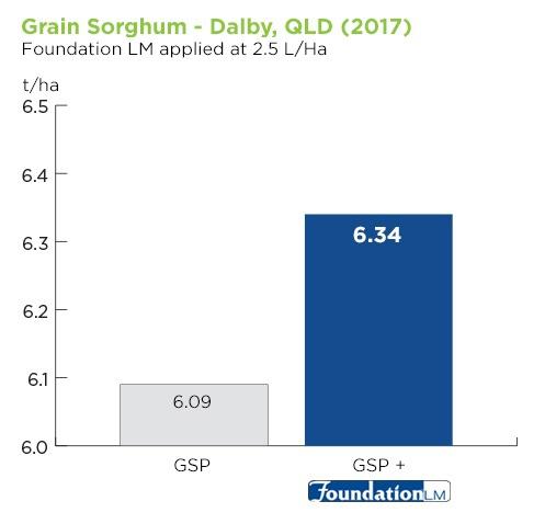 grain-sorghum-QLD.jpg