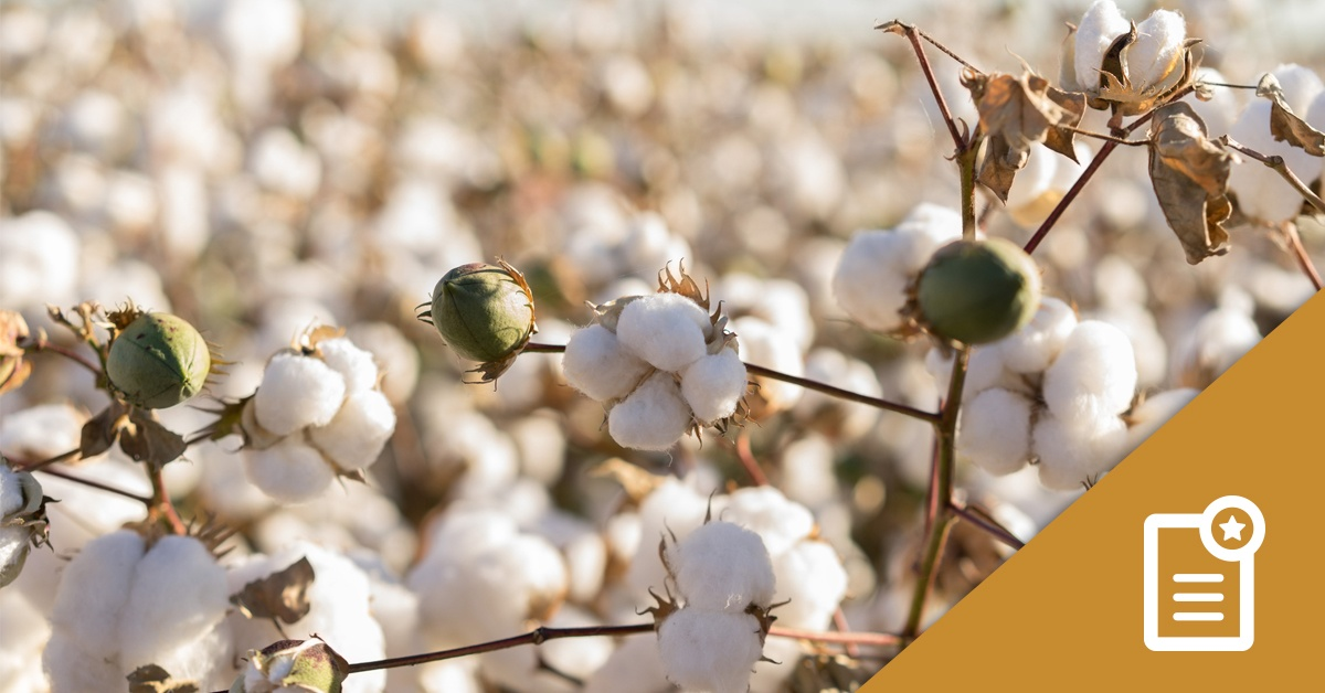 Basis & Foundation LM Cotton Study