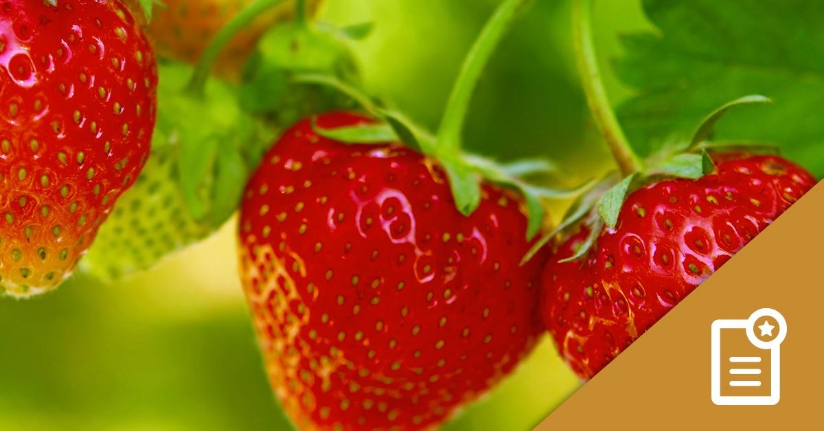 Foundation LM Strawberry Study